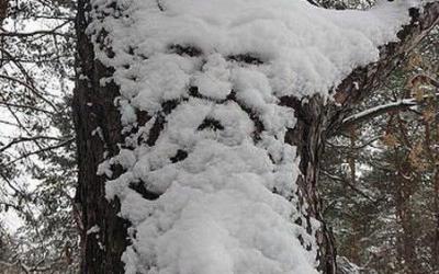 pareidolie-visage-objet-39