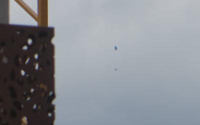 Grappes de ballons